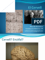 Processament Neuronal