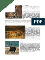 Animales en Peligro Extinción Chile