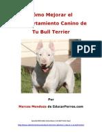 Como Mejorar El Comportamiento Canino de Tu Bull Terrier