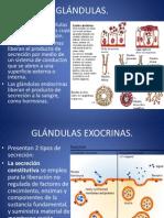 7.-GLÁNDULAS