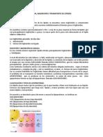 RESUMEN_DE_GRASAS-recuperado (2)