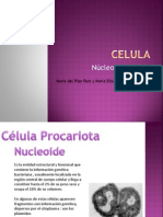 Microbiologia Inductrial Nucleo y Nucleolo