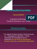 Video Deuteromycetes 2005 - 2006