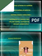 pelvisviiperinemasculino-111129172149-phpapp02