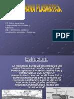membranaplasmatica-1