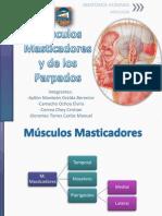 Músculos Masticadores y de los Párpados