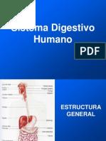 Sistema Digestivo Humano2