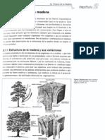 Biologia de La Madera