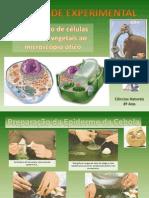 Aula experimental-epiderme da cebola e epitélio lingual