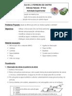 Experimental-cebola e epitélio lingual 2012-2013- 8º ano