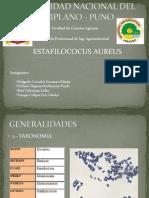 Universidad Nacional Del Altiplano - Puno - Estafilocoos.