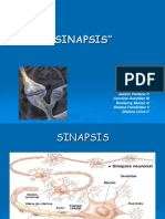 Sinapsisss Rev