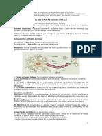 Sistema Nervioso Completo[1]