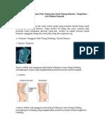Macam-Jenis Gangguan Pada Tulang Dan Sendi Tulang Manusia - Pengertian - Arti Definisi Penyakit