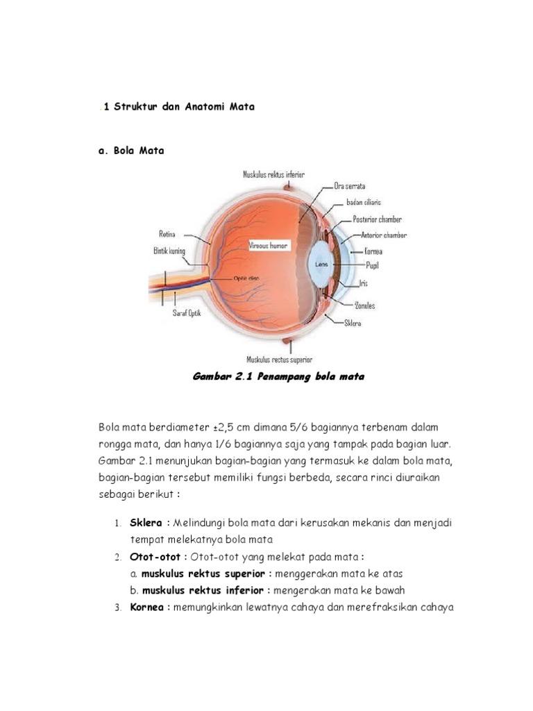 Anatomi fisiologi mata ccuart Gallery