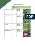 Listado de Plantas Urbanas