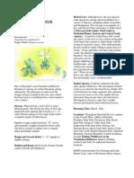 Bloodroot, Sanguinaria canadensis - Maryland Wildflower in Focus