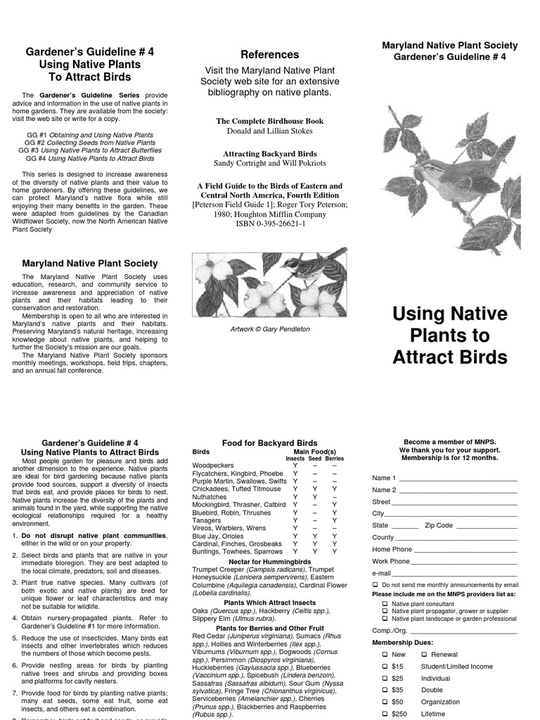 using native plants to attract birds gardener u0027s guidelines