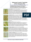 Submerged Aquatic Vegetation of the Chesapeake Bay - Plant Fact Sheet - Plant Materials Center, Beltsville, MD