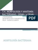 t 4 Morfologayanatomabacterianas 120511195614 Phpapp01