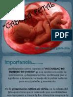 Cabeza Fetal Expo