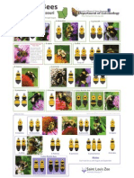 Bumble Bees of Illinois and Missouri Field Guide - University of Illinois at Urbana-Champaign