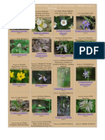 Maryland Wildflowers Catalog - Pictures and Information