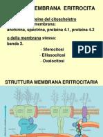 ESTRUTURA MEMBRANA ERITROC