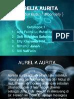 Aurelia Aurita