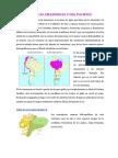 Cuencas Amazonicas y Del Pacifico