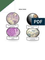Practica 2 Bilogia Molecular