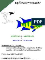 reprodução em peixes