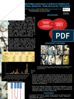 Poster Parmotrema