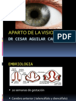 Anatomia de La Vision