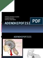 Adenohipofisis