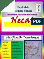 Necator2011