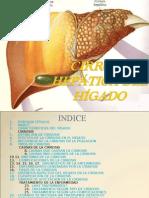 Cirrosis HepÁtica Acabada Entregar Xp