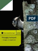Vitryggig hackspett – i skuggan av skogsbruket