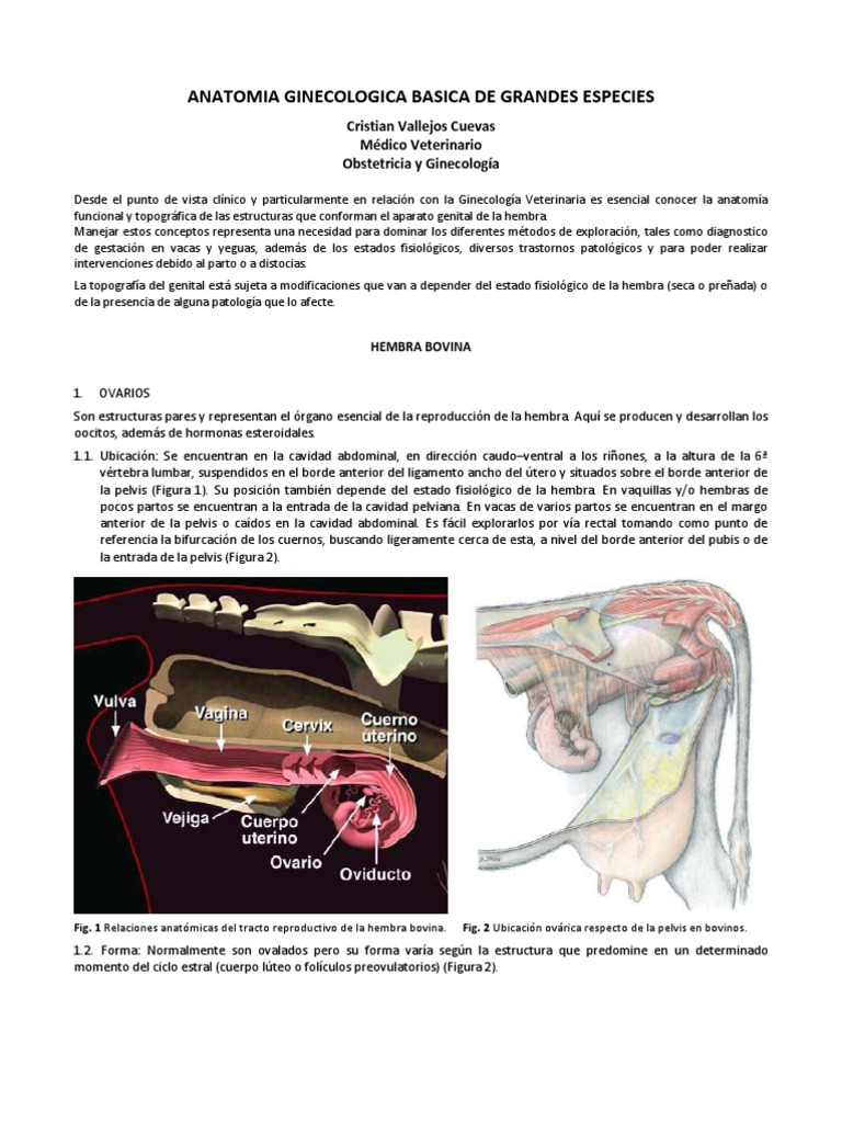 Apunte 01_anatomia Ginecologica