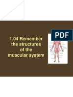 1 04 remember the structures of the muscular system