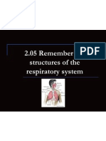 2 05 remember the structures of the respiratory system