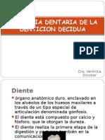 Anatomia Denticion Decidua