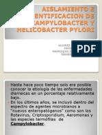 Aislamiento e Identificacion de Campylobacter y Helicobacter Pilory