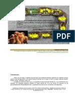 Análisis de la cadena de valor de la papa en Chile (Resumen)