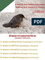 อนุกรมวิธานของนกกลุ่ม Reed และ Bush Warblers ในประเทศไทย