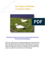 Different Types of Ducks - 5 Common Types