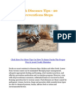 Duck Diseases Tips - 20 Preventions Steps