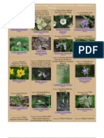 Maryland Wild Flower Catalog - Pictures and Information