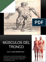 Musculos de Tronco