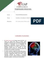 2. Cerebro y Conducta